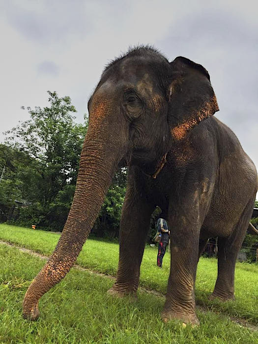 Happy Elephant Home chiang mai thailandia passionepassaporto