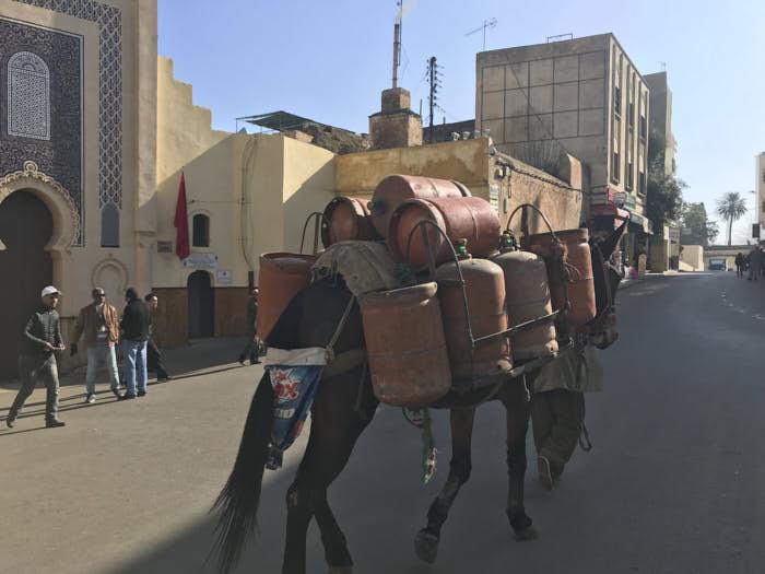 Fez Marocco Passione Passaporto