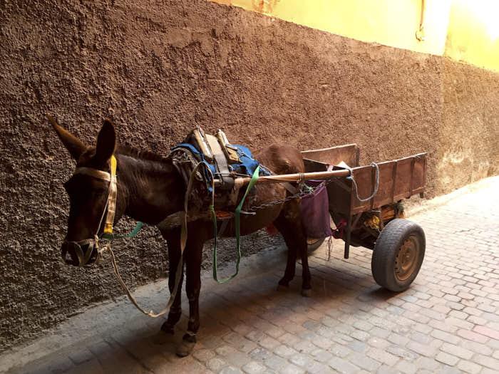 Medina Marrakech Marocco Passione Passaporto